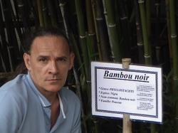 le-bambou-noir-4.jpg